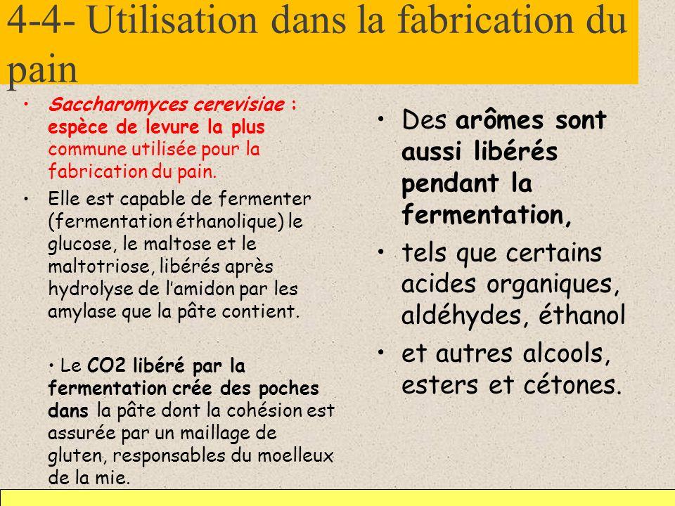 4-4- Utilisation dans la fabrication du pain Saccharomyces cerevisiae : espèce de levure la plus commune utilisée pour la fabrication du pain. Elle es