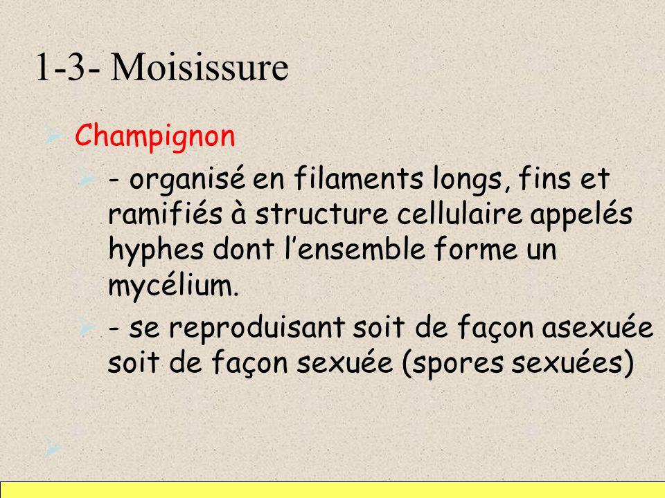 1-3- Moisissure Champignon - organisé en filaments longs, fins et ramifiés à structure cellulaire appelés hyphes dont lensemble forme un mycélium. - s