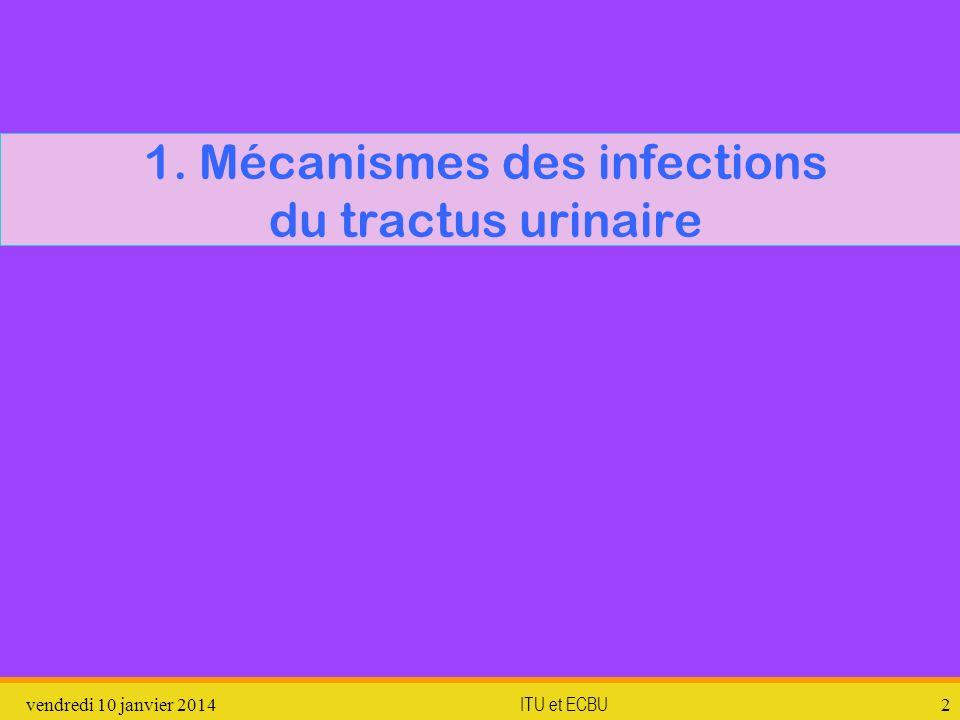 vendredi 10 janvier 2014 ITU et ECBU 2 1. Mécanismes des infections du tractus urinaire