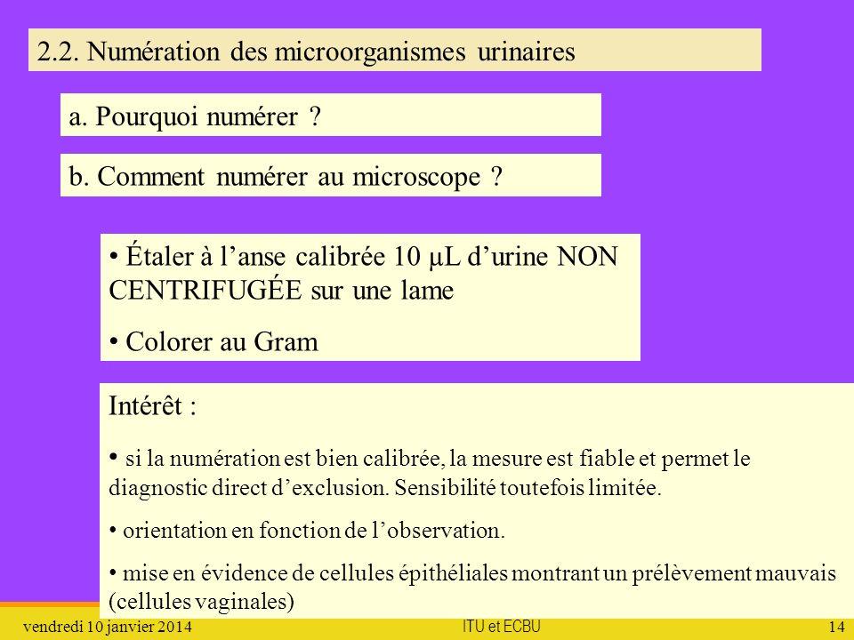 vendredi 10 janvier 2014 ITU et ECBU 14 2.2. Numération des microorganismes urinaires b. Comment numérer au microscope ? a. Pourquoi numérer ? Étaler