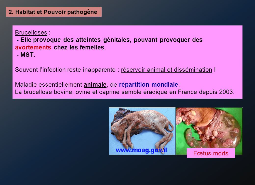 2. Habitat et Pouvoir pathogène Brucelloses : - Elle provoque des atteintes génitales, pouvant provoquer des avortements chez les femelles. - MST. Sou