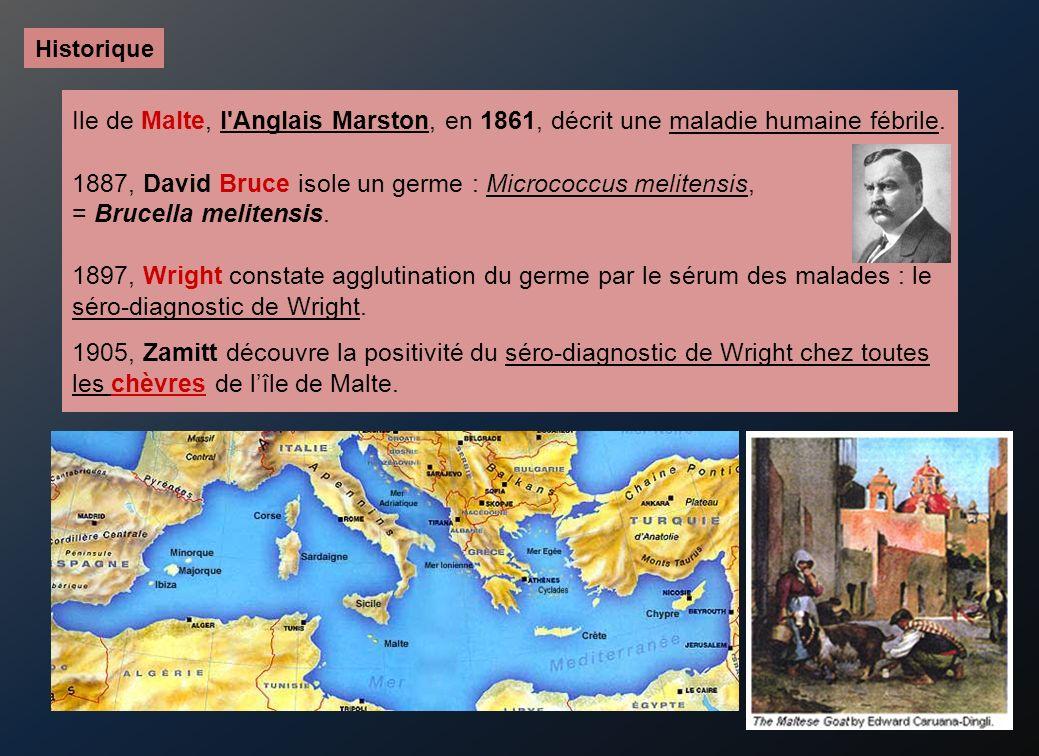 Ile de Malte, l Anglais Marston, en 1861, décrit une maladie humaine fébrile.