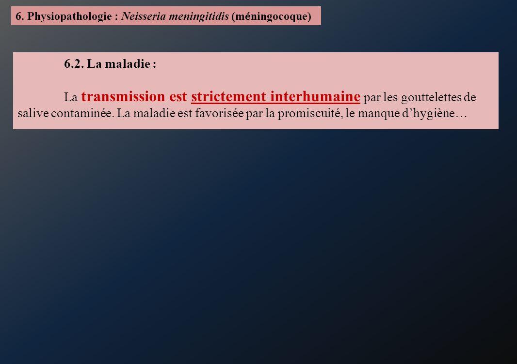 6. Physiopathologie : Neisseria meningitidis (m é ningocoque) 6.2. La maladie : La transmission est strictement interhumaine par les gouttelettes de s