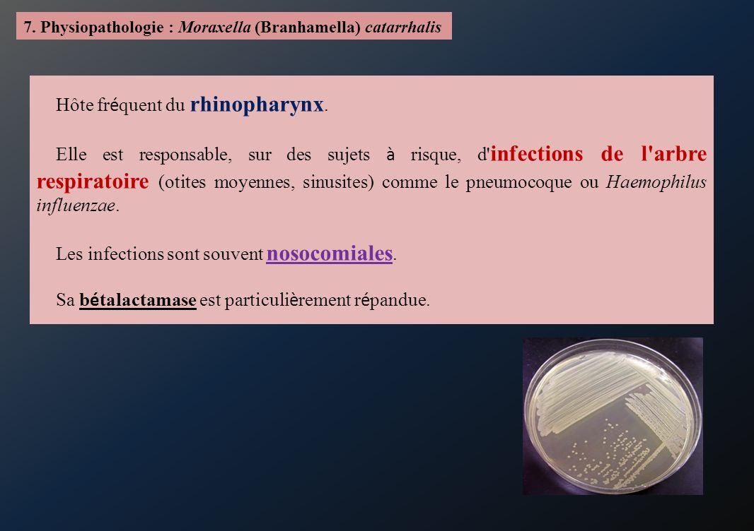 7. Physiopathologie : Moraxella (Branhamella) catarrhalis Hôte fr é quent du rhinopharynx. Elle est responsable, sur des sujets à risque, d' infection