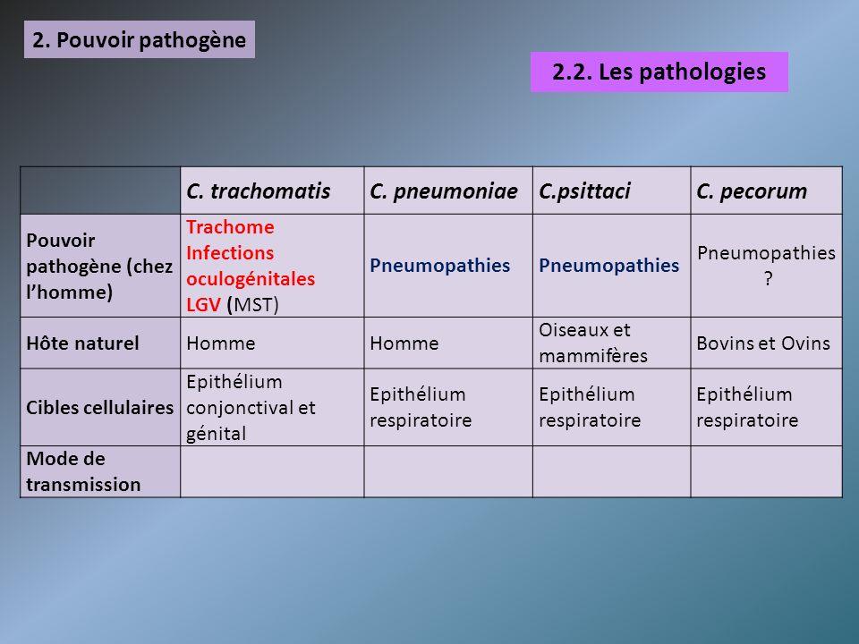 2. Pouvoir pathogène C. trachomatisC. pneumoniaeC.psittaciC. pecorum Pouvoir pathogène (chez lhomme) Trachome Infections oculogénitales LGV (MST) Pneu