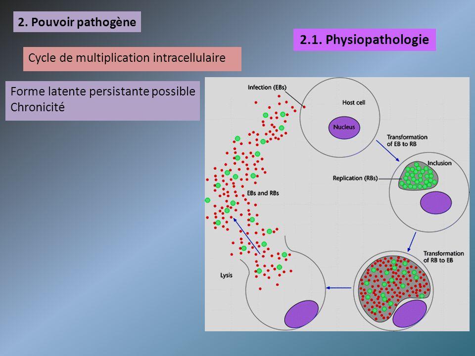 2. Pouvoir pathogène 2.1. Physiopathologie Cycle de multiplication intracellulaire Forme latente persistante possible Chronicité