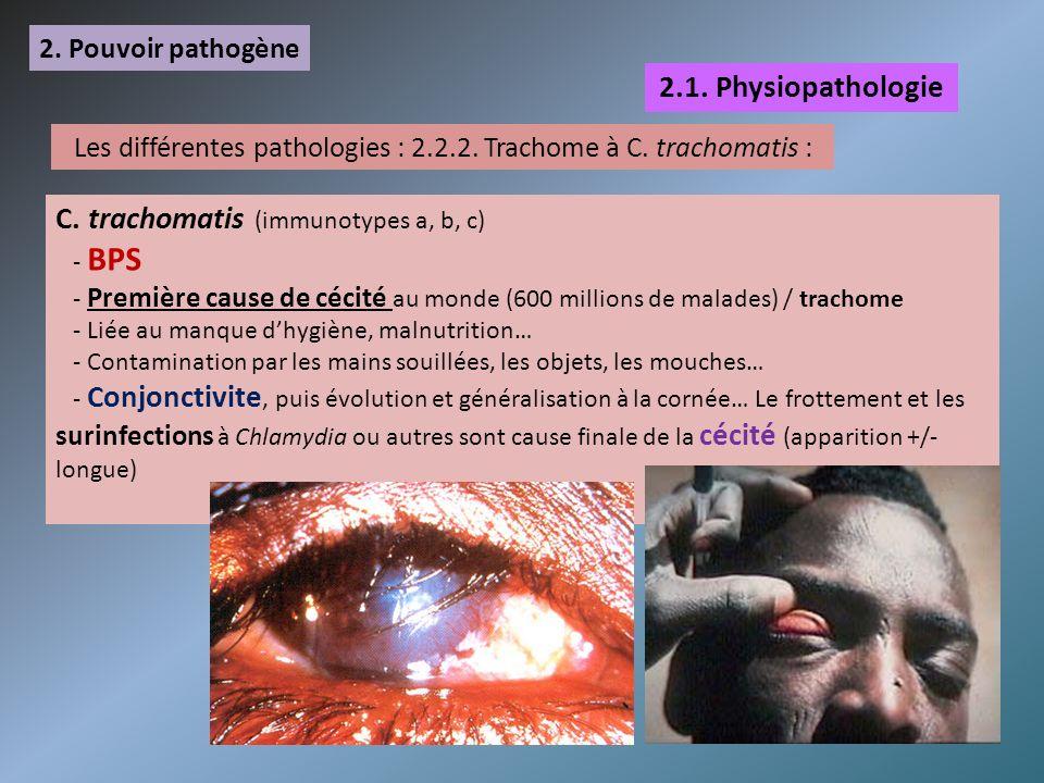 2. Pouvoir pathogène 2.1. Physiopathologie Les différentes pathologies : 2.2.2. Trachome à C. trachomatis : C. trachomatis (immunotypes a, b, c) - BPS