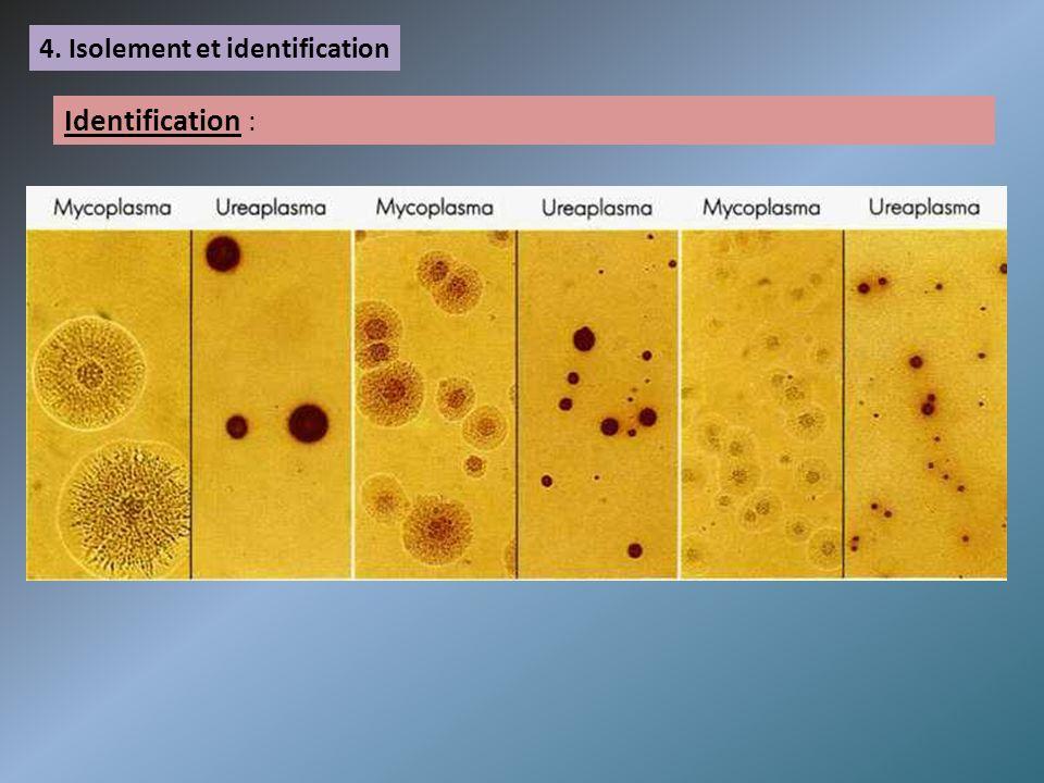 4. Isolement et identification Identification :