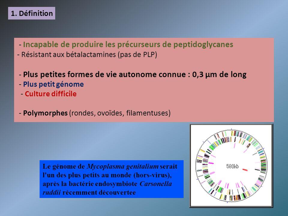1. Définition - Incapable de produire les précurseurs de peptidoglycanes - Résistant aux bétalactamines (pas de PLP) - Plus petites formes de vie auto