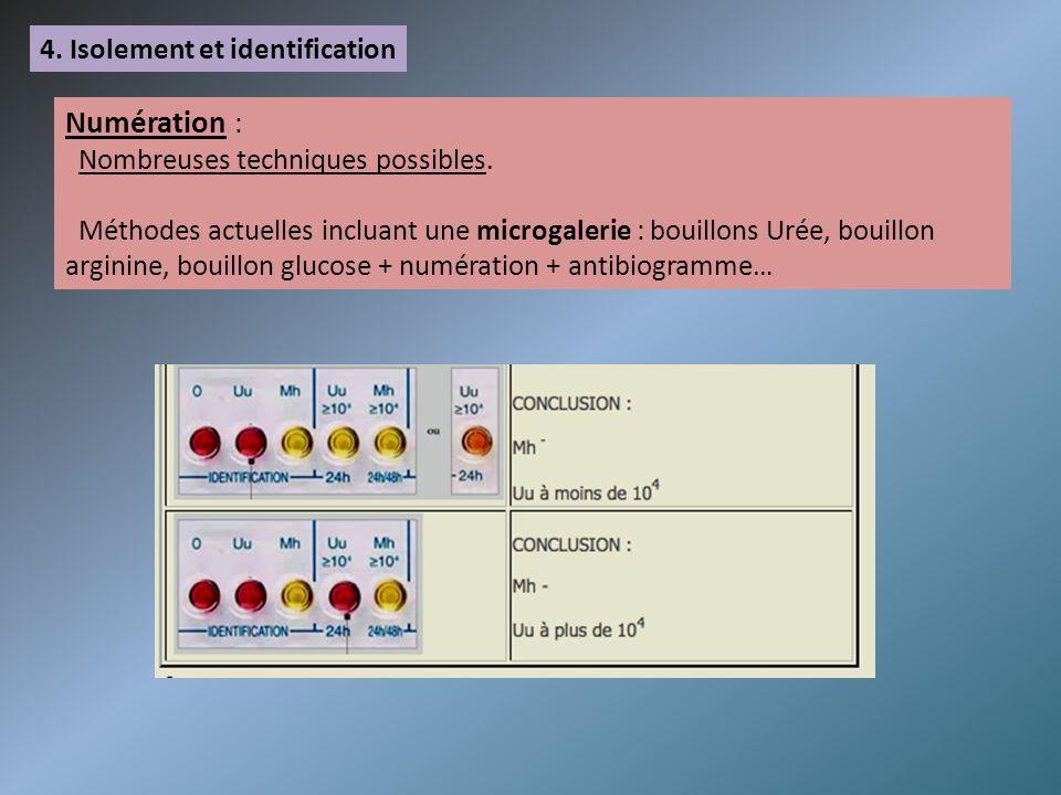 4. Isolement et identification Numération : Nombreuses techniques possibles. Méthodes actuelles incluant une microgalerie : bouillons Urée, bouillon a