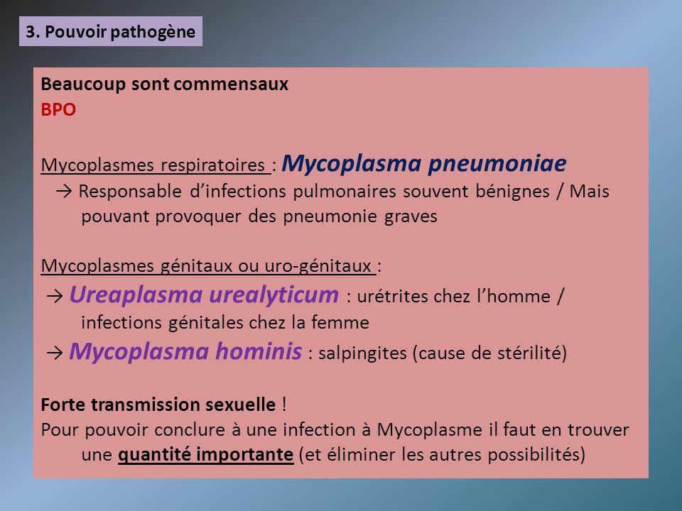 3. Pouvoir pathogène Beaucoup sont commensaux BPO Mycoplasmes respiratoires : Mycoplasma pneumoniae Responsable dinfections pulmonaires souvent bénign