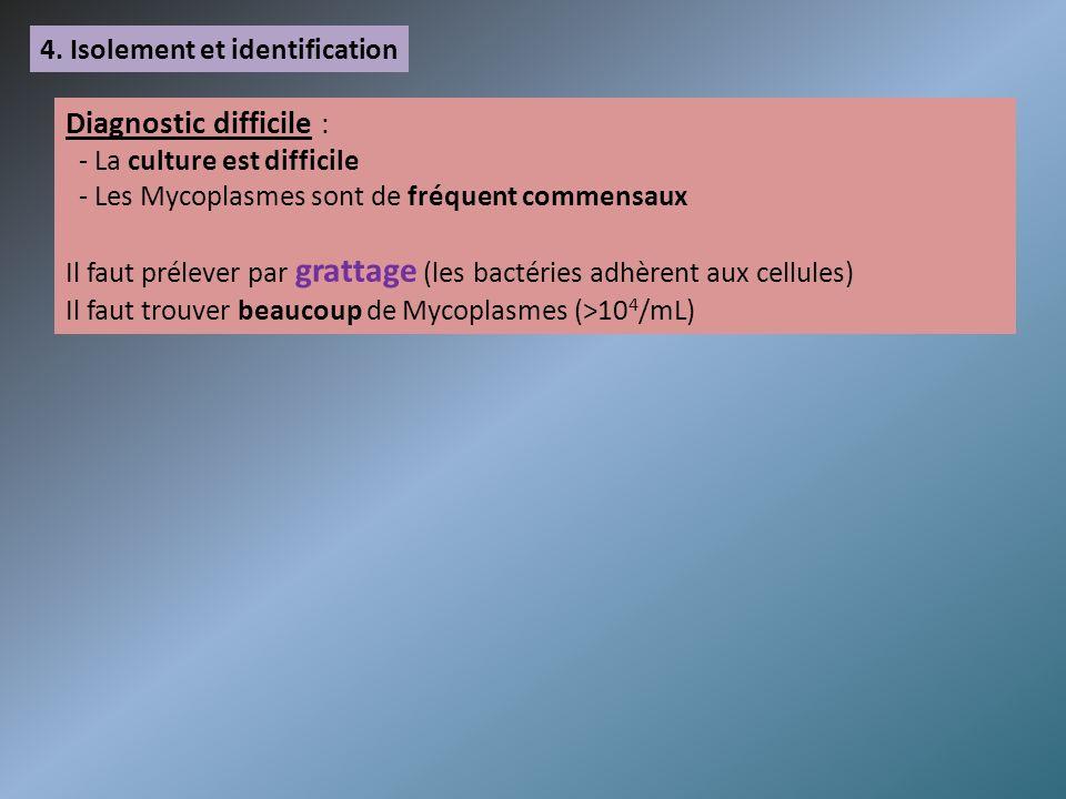 4. Isolement et identification Diagnostic difficile : - La culture est difficile - Les Mycoplasmes sont de fréquent commensaux Il faut prélever par gr
