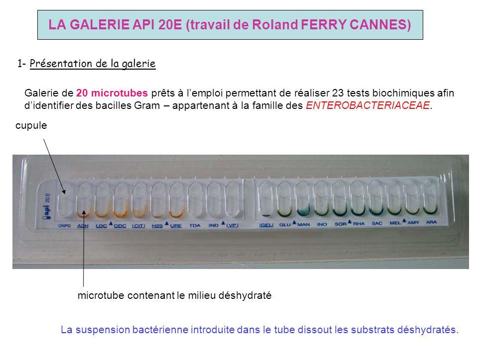 LA GALERIE API 20E (travail de Roland FERRY CANNES) 1- Présentation de la galerie Galerie de 20 microtubes prêts à lemploi permettant de réaliser 23 t