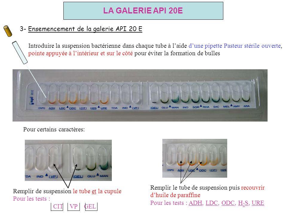 3- Ensemencement de la galerie API 20 E Introduire la suspension bactérienne dans chaque tube à laide dune pipette Pasteur stérile ouverte, pointe app