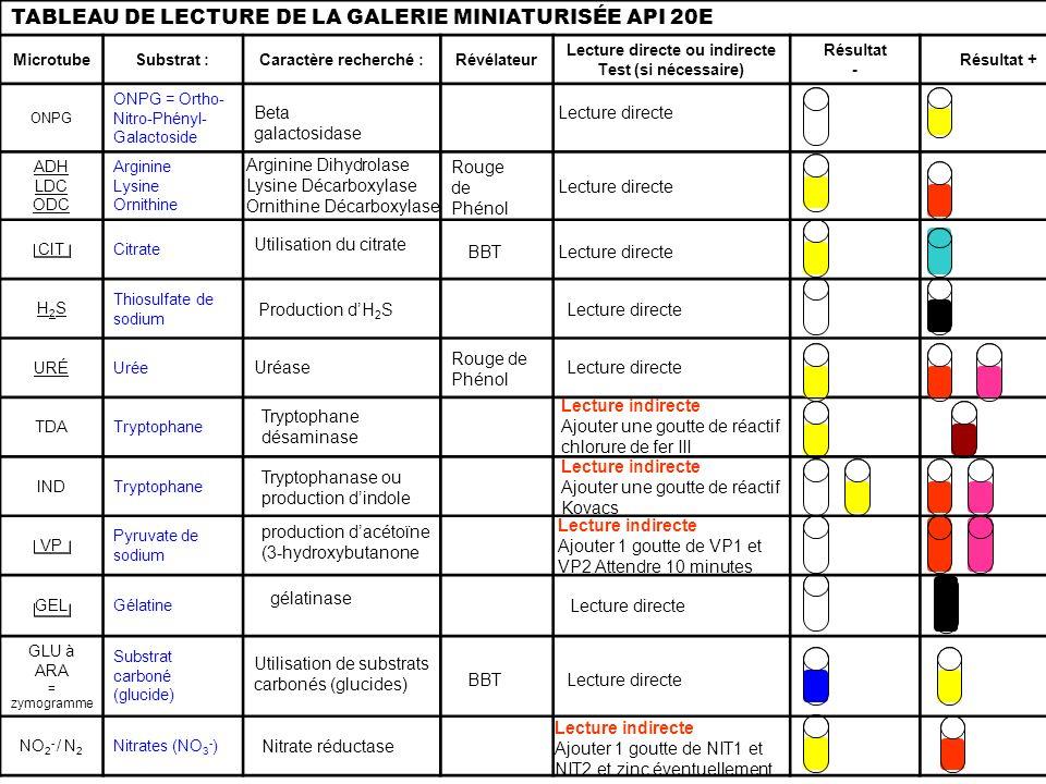 TABLEAU DE LECTURE DE LA GALERIE MINIATURISÉE API 20E MicrotubeSubstrat :Caractère recherché :Révélateur Lecture directe ou indirecte Test (si nécessa