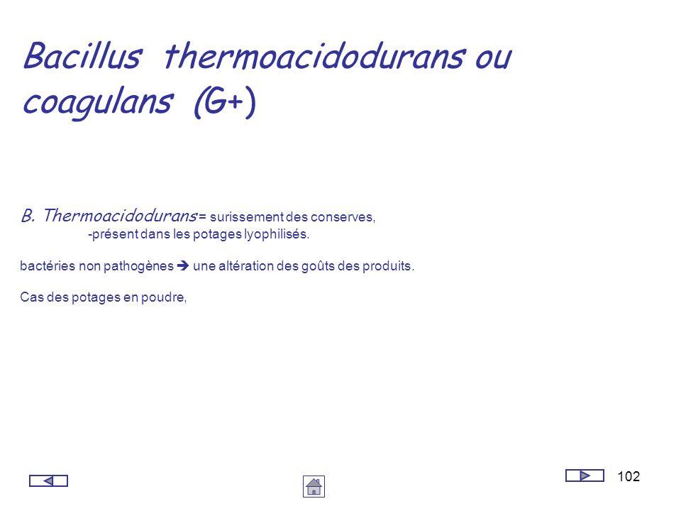 102 Bacillus thermoacidodurans ou coagulans (G+) B. Thermoacidodurans = surissement des conserves, -présent dans les potages lyophilisés. bactéries no