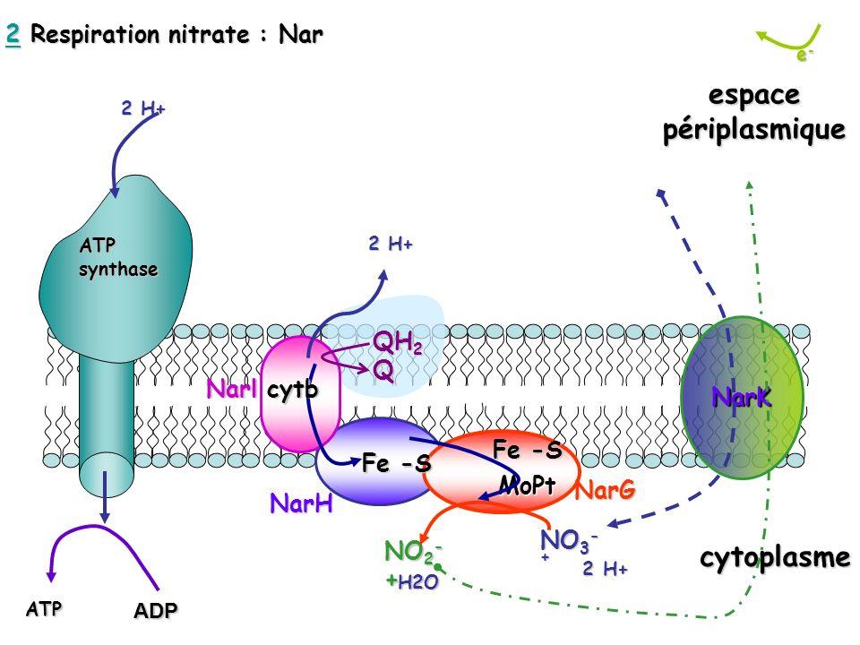 e-e-e-e- cytoplasme espacepériplasmique 2 H+ ATPsynthase MoPt MoPt 2 H+ 2 H+ NO 3 - + H2O NO 2 - + QH 2 Q 2 H+ cytb Fe -S NarlNarH NarG NarK ATPADP 22