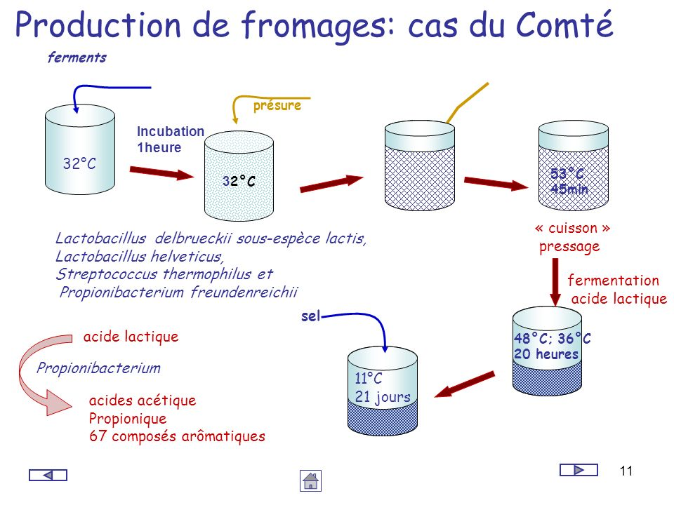 11 Production de fromages: cas du Comté Lactobacillus delbrueckii sous-espèce lactis, Lactobacillus helveticus, Streptococcus thermophilus et Propioni
