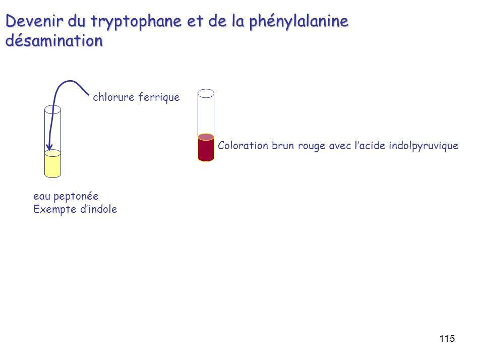 115 Devenir du tryptophane et de la phénylalanine désamination eau peptonée Exempte dindole chlorure ferrique Coloration brun rouge avec lacide indolp