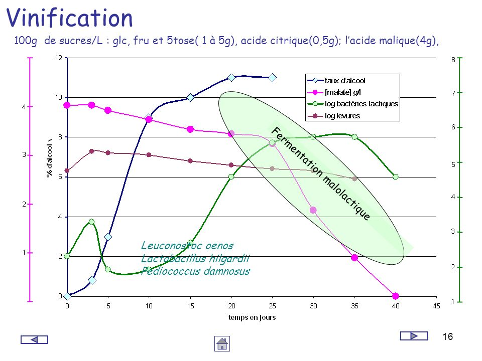 16 Vinification Leuconostoc oenos Lactobacillus hilgardii Pediococcus damnosus Fermentation malolactique 100g de sucres/L : glc, fru et 5tose( 1 à 5g)