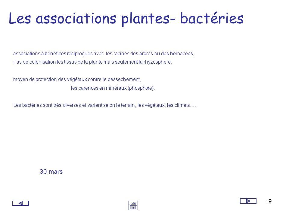 19 Les associations plantes- bactéries associations à bénéfices réciproques avec les racines des arbres ou des herbacées, Pas de colonisation les tiss