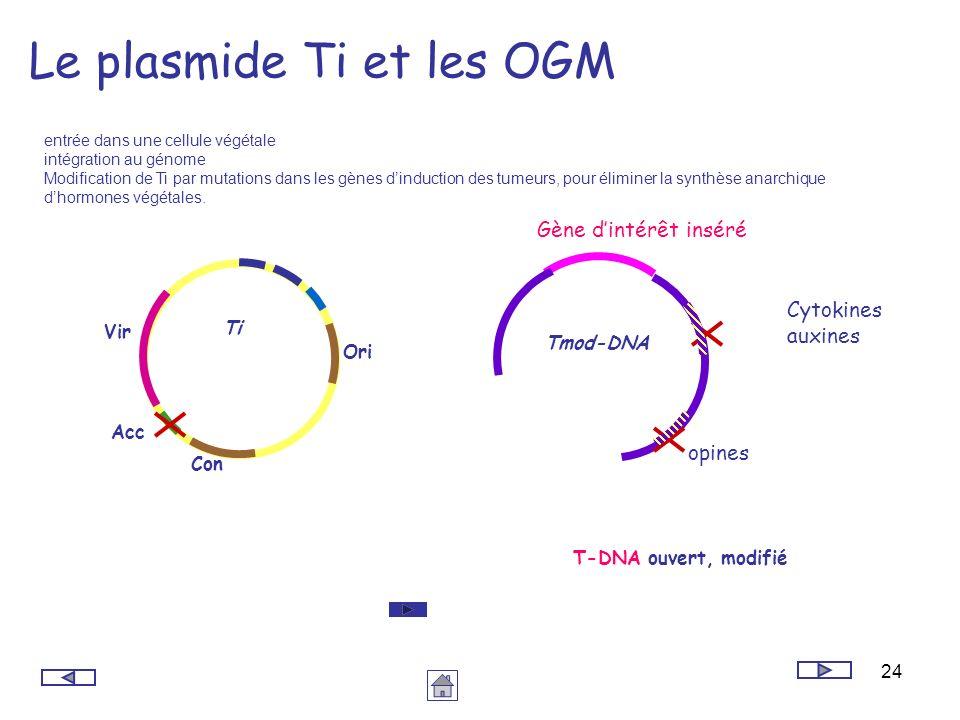 24 Le plasmide Ti et les OGM entrée dans une cellule végétale intégration au génome Modification de Ti par mutations dans les gènes dinduction des tum