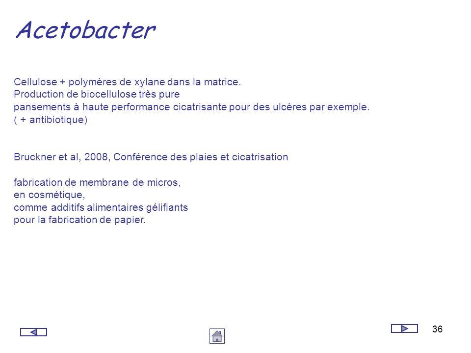 36 Acetobacter Cellulose + polymères de xylane dans la matrice. Production de biocellulose très pure pansements à haute performance cicatrisante pour