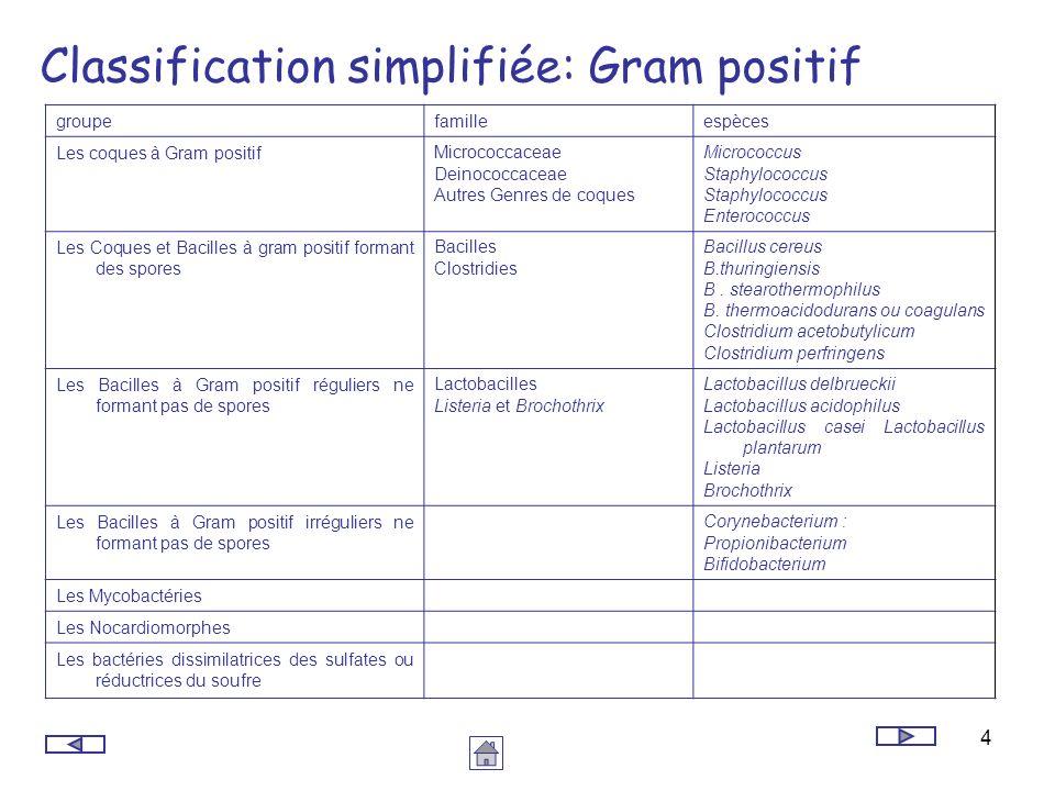 4 Classification simplifiée: Gram positif groupefamilleespèces Les coques à Gram positifMicrococcaceae Deinococcaceae Autres Genres de coques Micrococ