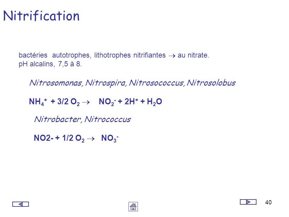 40 Nitrification bactéries autotrophes, lithotrophes nitrifiantes au nitrate. pH alcalins, 7,5 à 8. Nitrobacter, Nitrococcus NO2- + 1/2 O 2 NO 3 - Nit