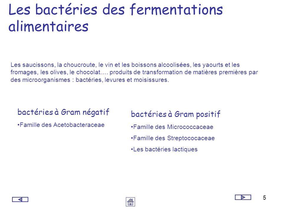 5 Les bactéries des fermentations alimentaires Les saucissons, la choucroute, le vin et les boissons alcoolisées, les yaourts et les fromages, les oli