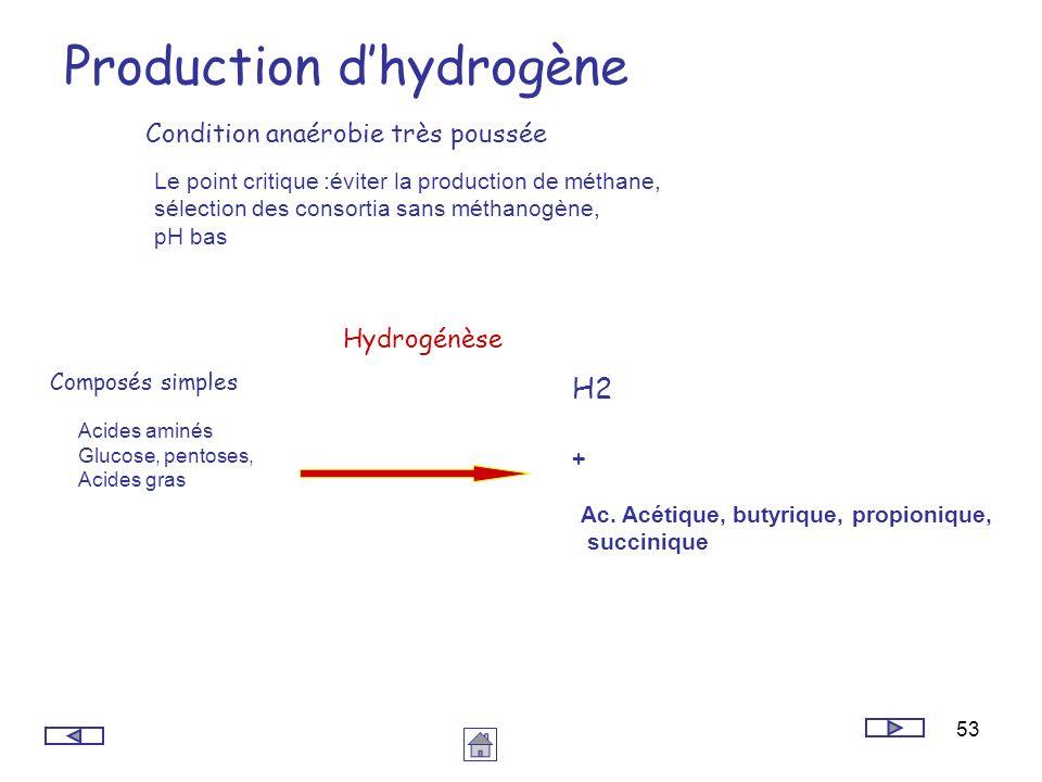 53 Production dhydrogène Composés simples Acides aminés Glucose, pentoses, Acides gras Ac. Acétique, butyrique, propionique, succinique H2 + Hydrogénè
