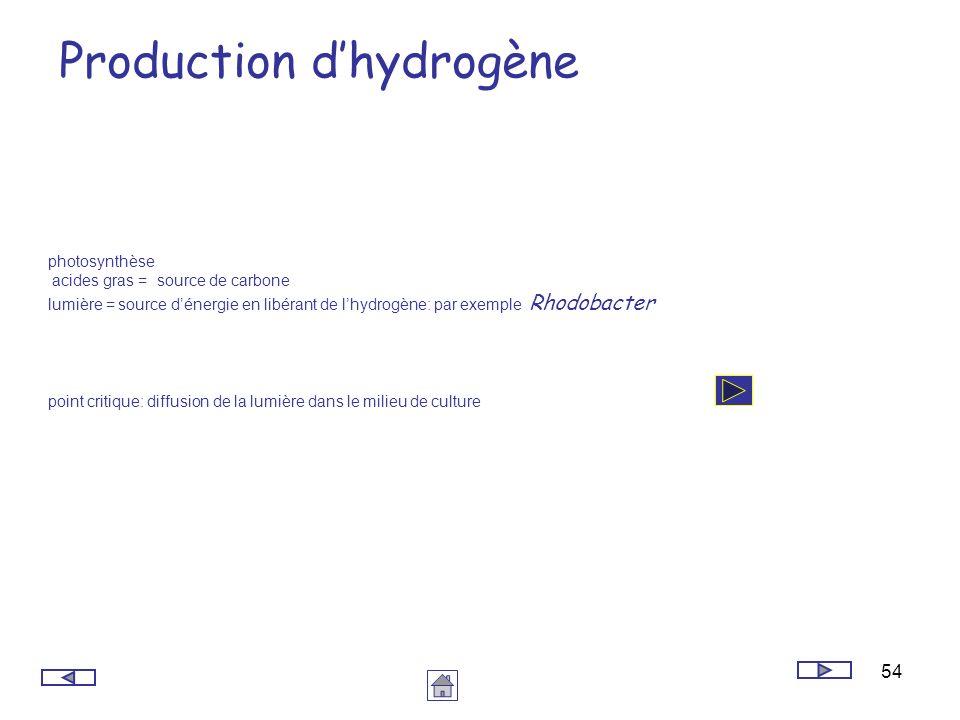54 Production dhydrogène photosynthèse acides gras = source de carbone lumière = source dénergie en libérant de lhydrogène: par exemple Rhodobacter po