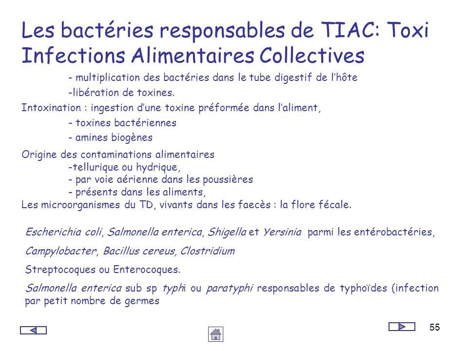 55 Les bactéries responsables de TIAC: Toxi Infections Alimentaires Collectives - multiplication des bactéries dans le tube digestif de lhôte -libérat