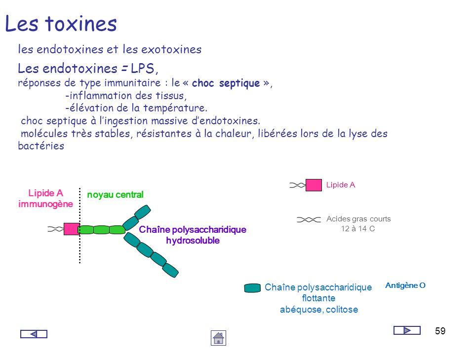 59 Les toxines les endotoxines et les exotoxines Les endotoxines = LPS, réponses de type immunitaire : le « choc septique », -inflammation des tissus,