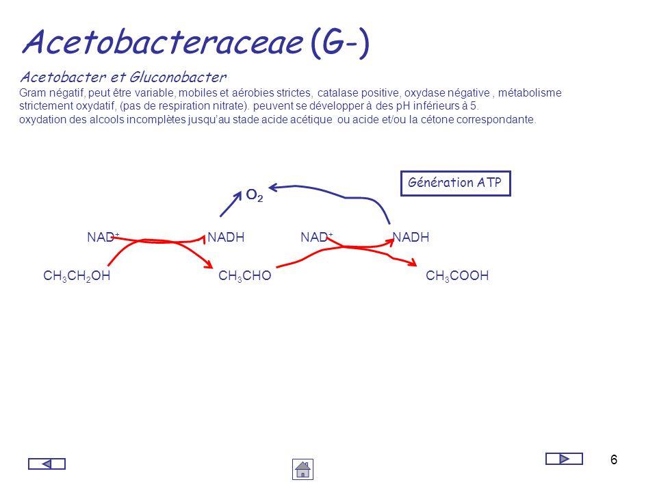 6 Acetobacteraceae (G-) Acetobacter et Gluconobacter Gram négatif, peut être variable, mobiles et aérobies strictes, catalase positive, oxydase négati