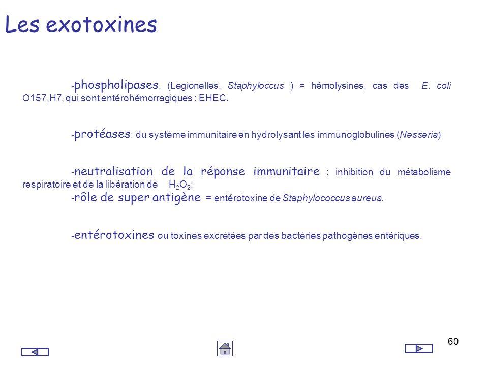 60 Les exotoxines - phospholipases, (Legionelles, Staphyloccus ) = hémolysines, cas des E. coli O157,H7, qui sont entérohémorragiques : EHEC. - protéa