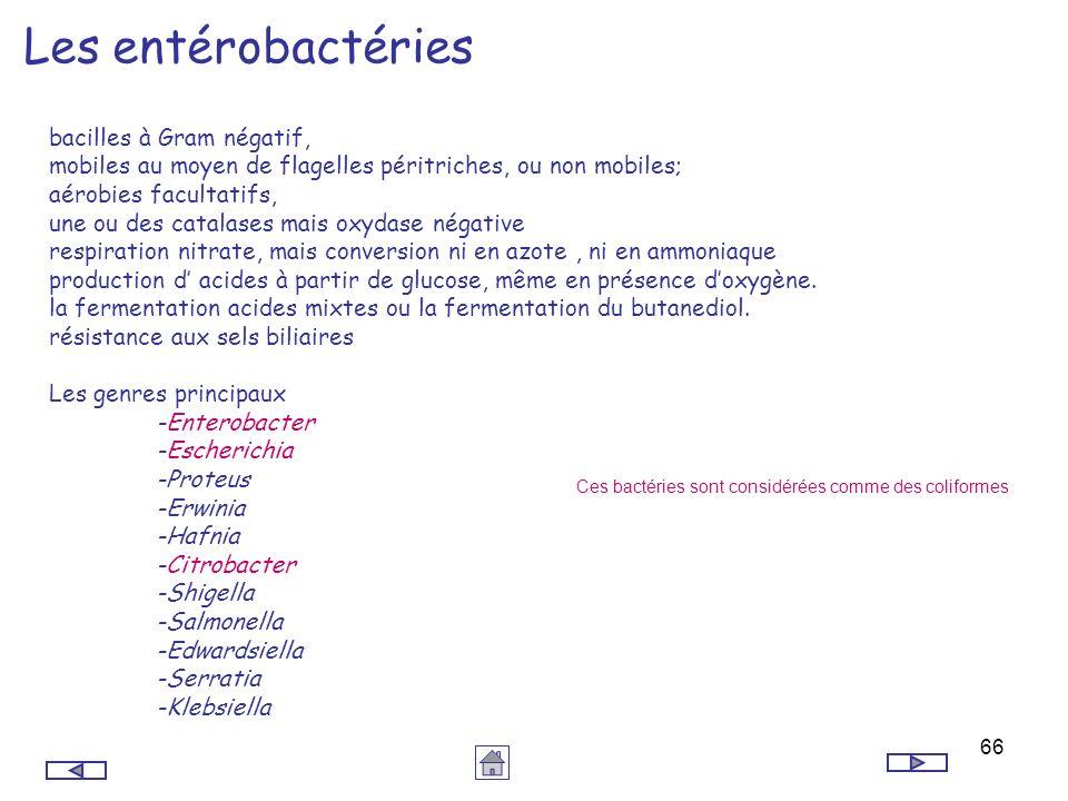 66 Les entérobactéries bacilles à Gram négatif, mobiles au moyen de flagelles péritriches, ou non mobiles; aérobies facultatifs, une ou des catalases