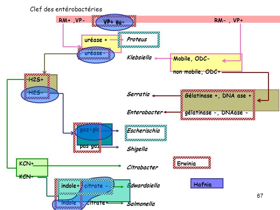 67 RM+,VP- RM-, VP+ Proteus Klebsiella Serratia Enterobacter Escherischia Shigella Citrobacter Edwardsiella Salmonella uréase + uréase - Mobile, ODC-