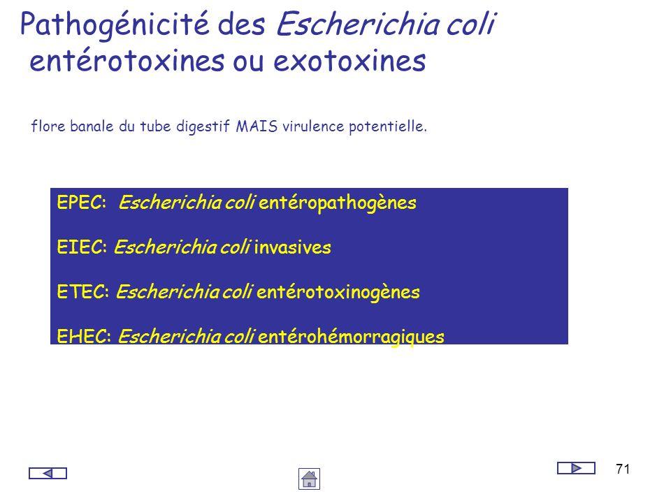 71 Pathogénicité des Escherichia coli entérotoxines ou exotoxines flore banale du tube digestif MAIS virulence potentielle. EPEC: Escherichia coli ent