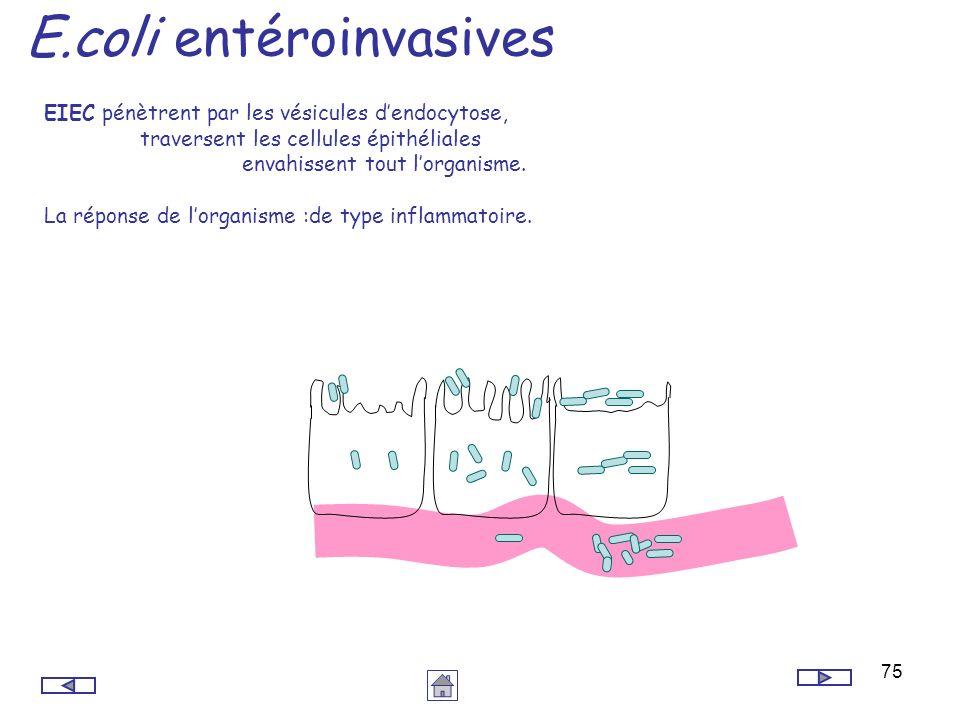 75 E.coli entéroinvasives EIEC pénètrent par les vésicules dendocytose, traversent les cellules épithéliales envahissent tout lorganisme. La réponse d