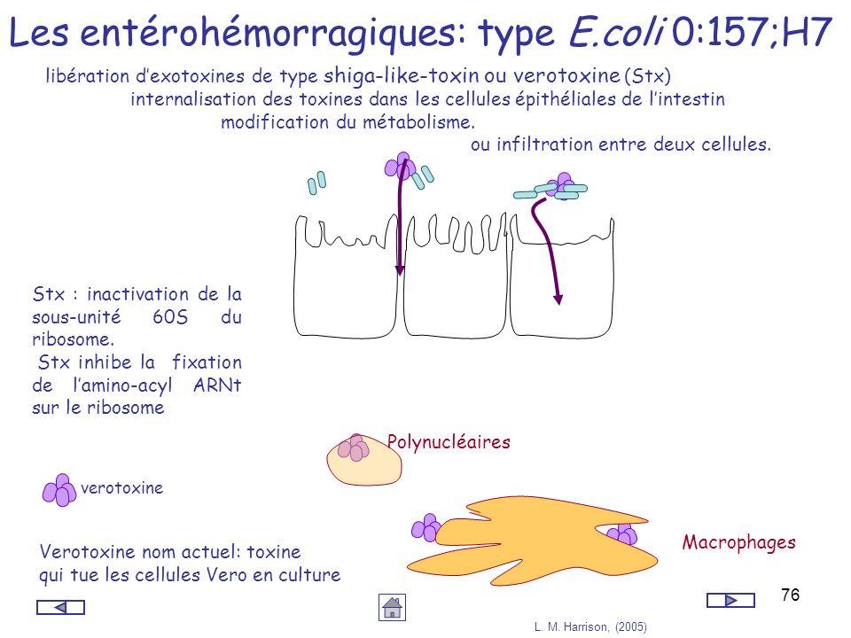 76 Les entérohémorragiques: type E.coli 0:157;H7 libération dexotoxines de type shiga-like-toxin ou verotoxine (Stx) internalisation des toxines dans
