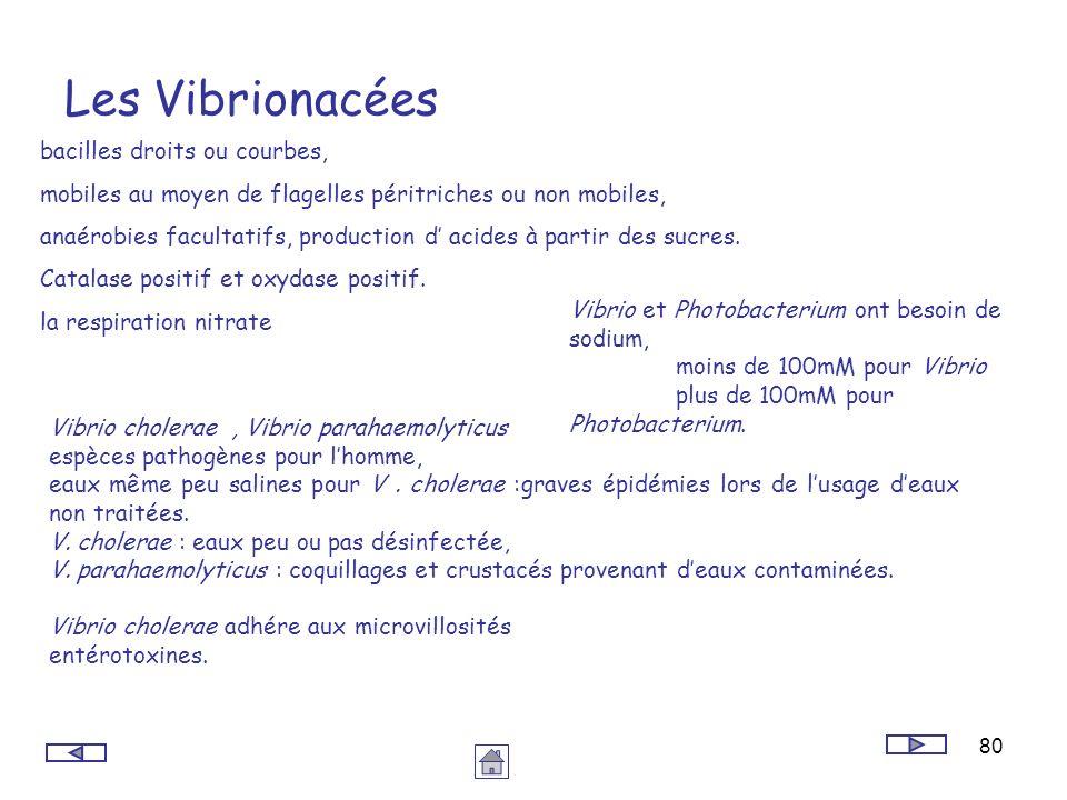 80 Les Vibrionacées bacilles droits ou courbes, mobiles au moyen de flagelles péritriches ou non mobiles, anaérobies facultatifs, production d acides