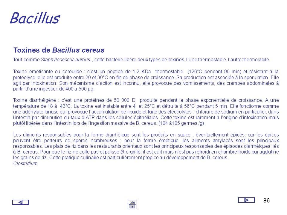 86 Bacillus Toxines de Bacillus cereus Tout comme Staphylococcus aureus, cette bactérie libère deux types de toxines, lune thermostable, lautre thermo