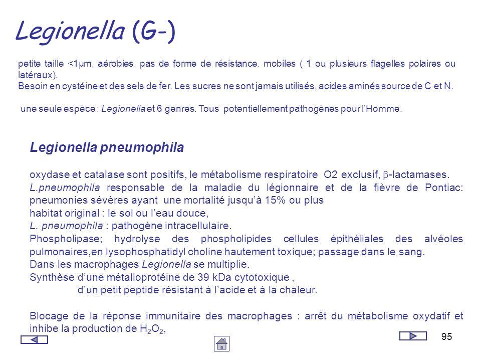95 Legionella (G-) petite taille <1µm, aérobies, pas de forme de résistance. mobiles ( 1 ou plusieurs flagelles polaires ou latéraux). Besoin en cysté