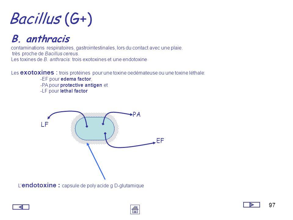 97 Bacillus (G+) B. anthracis contaminations respiratoires, gastrointestinales, lors du contact avec une plaie. très proche de Bacillus cereus. Les to