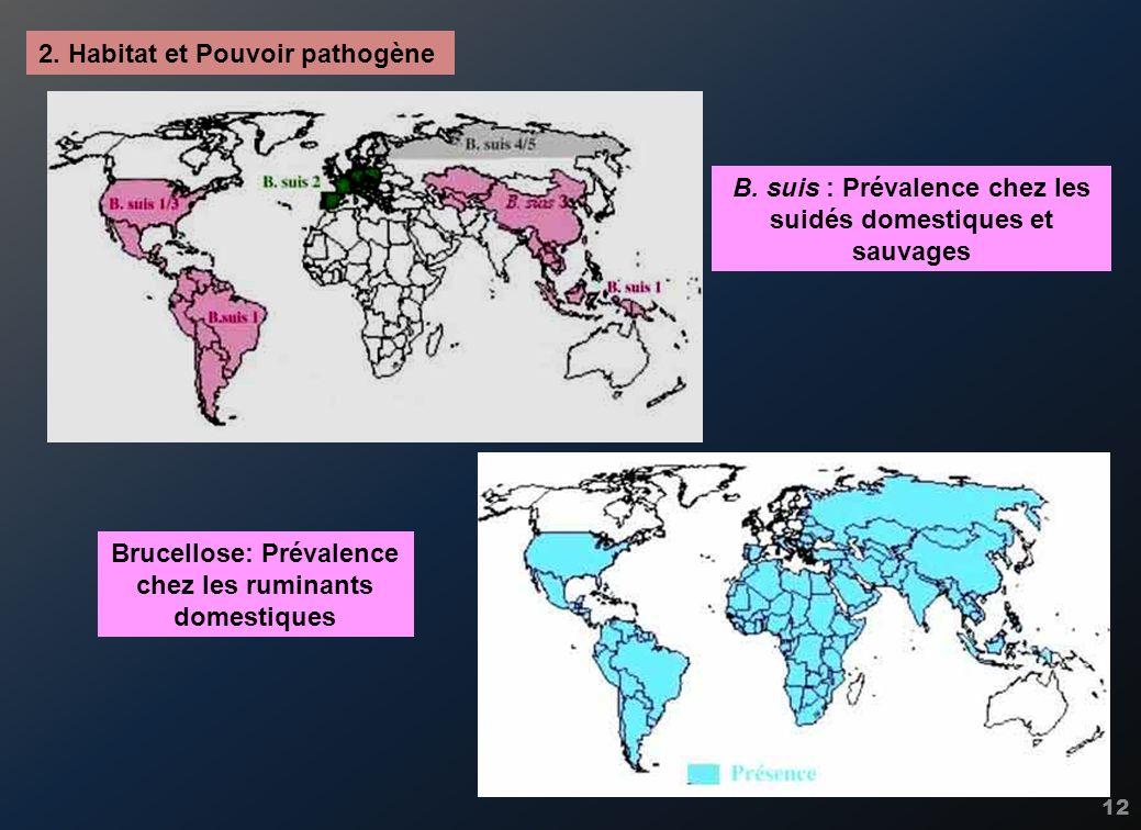 12 2. Habitat et Pouvoir pathogène B. suis : Prévalence chez les suidés domestiques et sauvages Brucellose: Prévalence chez les ruminants domestiques