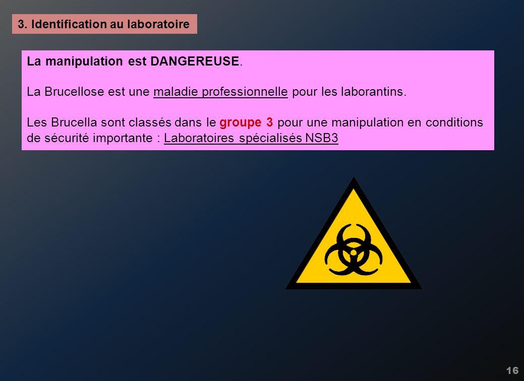 16 3. Identification au laboratoire La manipulation est DANGEREUSE. La Brucellose est une maladie professionnelle pour les laborantins. Les Brucella s