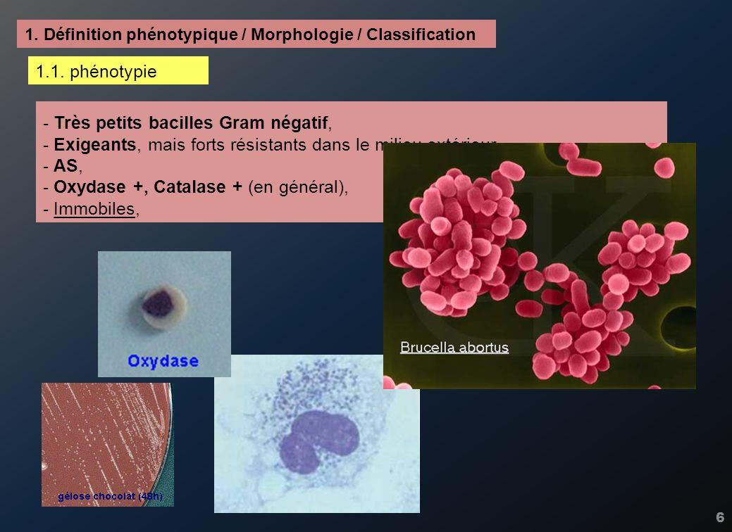 7 - Très petits bacilles Gram négatif, - Exigeants, mais forts résistants dans le milieu extérieur, - AS, - Oxydase +, Catalase + (en général), - Immobiles, - Uréase (rapide/constitutive) +, pour les souches pathogènes en général, - Glucides – (sur HL ou CTA) : en fait voie uniquement oxydative (et faible) 1.