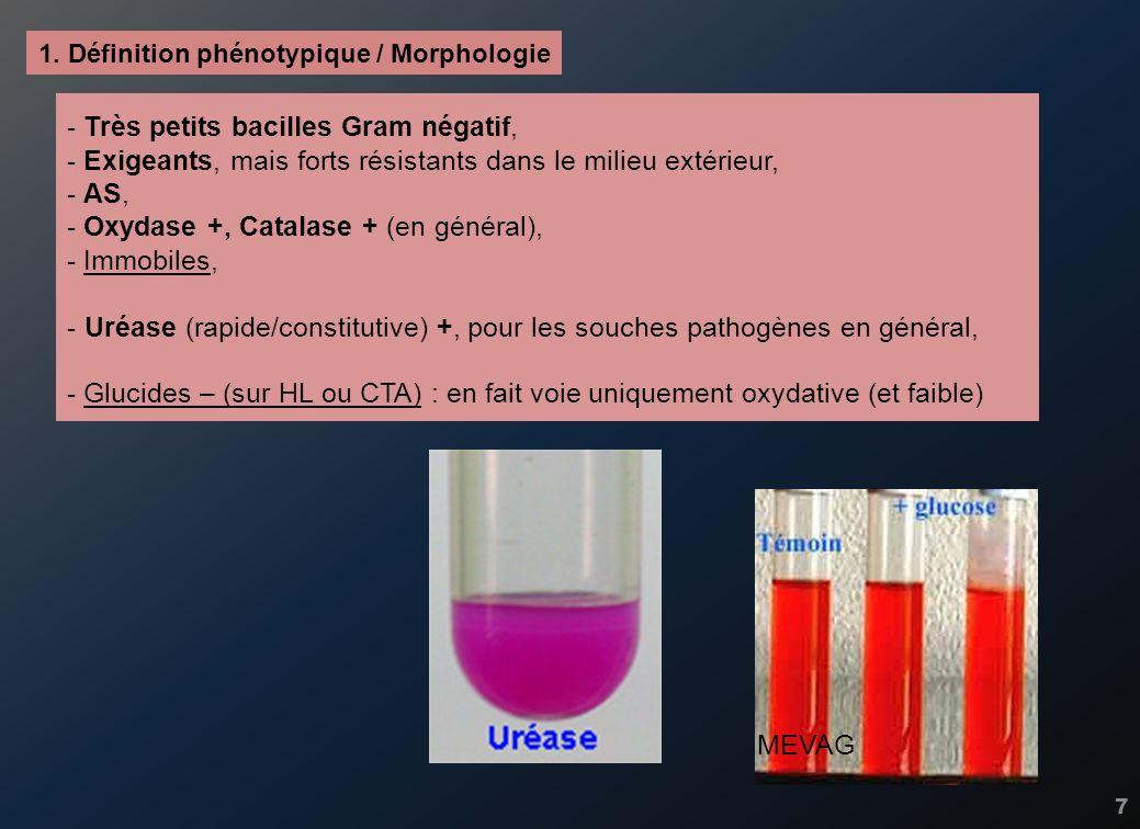 7 - Très petits bacilles Gram négatif, - Exigeants, mais forts résistants dans le milieu extérieur, - AS, - Oxydase +, Catalase + (en général), - Immo