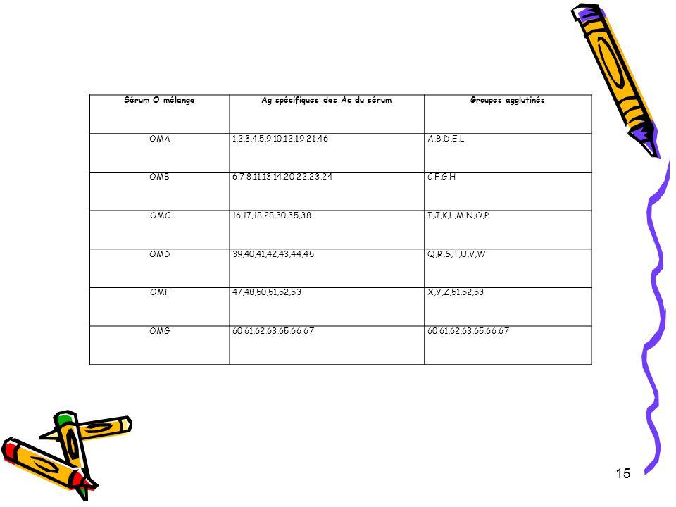 15 Sérum O mélangeAg spécifiques des Ac du sérumGroupes agglutinés OMA1,2,3,4,5,9,10,12,19,21,46A,B,D,E,L OMB6,7,8,11,13,14,20,22,23,24C,F,G,H OMC16,1